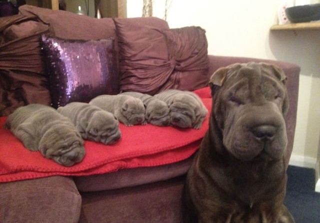 Adorable Puppies and Mommies